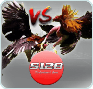 S128 Cockfight